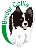 ilhotes Border Collie